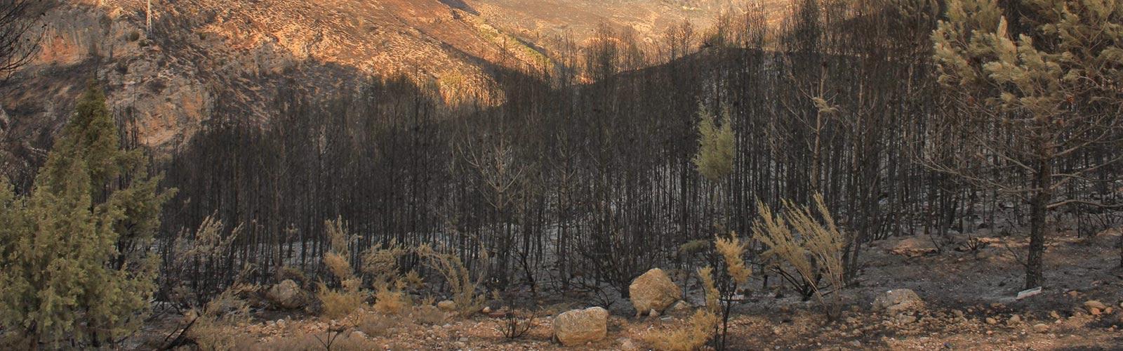 Imagen de portada de El Proyecto.